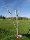 Le parc terre-neuvien de Beaumont-Hamel (France – Somme)